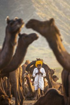 """""""My Camel My Shield"""" von Sabbyy Sg - National Geographic Photography Indian Photography, Wildlife Photography, Animal Photography, Street Photography, Happy Photography, Photography Lessons, White Photography, Landscape Photography, Portrait Photography"""