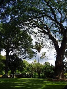 Foster Botanical Garden - It also contains a number of exceptional trees, including a Sacred Fig which is a clone descendant of the Bodhi tree that Buddha sat under for inspiration, a sapling of which was gifted to Mary Foster by Anagarika Dharmapala in 1913.