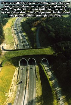 Funny pictures about Wildlife bridge in the Netherlands. Oh, and cool pics about Wildlife bridge in the Netherlands. Also, Wildlife bridge in the Netherlands. Wild Life, Mundo Design, Parcs Canada, Natural Bridge, Photos Voyages, Thinking Day, Banff National Park, Animal Crossing, Deer Crossing