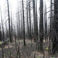 charred woodland - Google Search