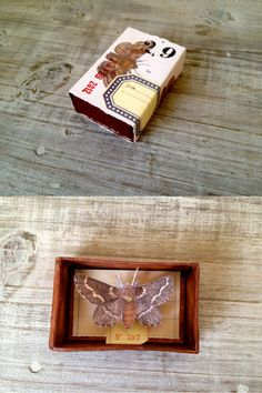 "A look inside one of the beautiful handmade matchboxes by Lobster and Swan. Reminds me of the things you could find in old ""curiosity shops"" - great as a random little gift to tease the senses. http://blog.lobsterandswan.com/2012/02/day-29-the-extra-one-cabinet-of-curiosities-matchboxaday/"