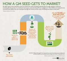 How a GMO seed gets to market!