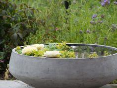 Small Gardens, Water Garden, Garden Inspiration, Serving Bowls, Concrete, Exterior, Balcony Ideas, Backyard Ideas, Tableware
