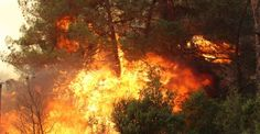 Bayındır'da rüzgarın etkisi, yangına müdahaleyi güçleştiriyor