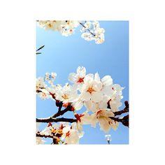 【fffll__】さんのInstagramをピンしています。 《▽△▽ . . . . #写真好きな人と繋がりたい #寒い日が続きますね #四季#いつが好きですか ? #早く春になって#桜#見たいなあ #cherrytree#spring#spring2016#love#like#pink#blue#skm#skyblue#tree#natural#beatiful#cherry#japan#japanphoto#kyoto#japanlover#plan#tflst#photograph#kyotophoto#iPhone6》