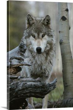 Лучший день в моей жизни ray wolf
