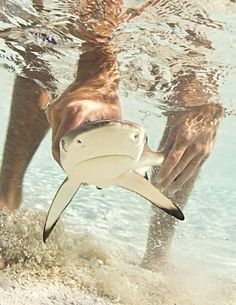 <3 sharks Touched one of these baby sharks in Naples Florida