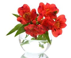 alstroemeria red flowers in vase isolated on white Stock Photo