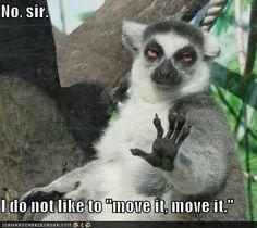 I'm obsessed   hilarious   move it   joke   animal meme
