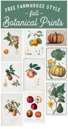 Free Fall Botanical Prints Round-Up - Gather and Flourish Decoupage, Vintage Fall, Fall Home Decor, Free Prints, Botanical Art, Botanical Drawings, Vintage Prints, Vintage Botanical Prints, Fall Crafts