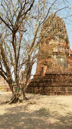 Wat Maha That, Ayutthaya - Thailand