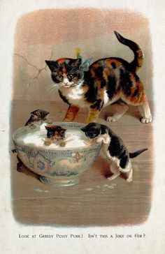 Kitten in the Cream. Helena Maguire.