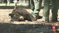 Florida fish and wildlife investigators are looking into the death of a bear in Sanford.