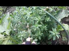 Secrete ale cultivarii castravetilor in gradina bio - magazinul de acasă Solar, Deco, Agriculture, Plant, Decoration, Deko, Decor, Dekoration, Interiors