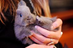 Okay...its official, I want a bunny !