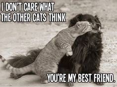 41 funny animal pictures with captions. Funny animal pictures of cats and dogs and other funny animals. I Love Cats, Crazy Cats, Cute Cats, Funny Cats, Funny Animals, Cute Animals, Animals Dog, Tierischer Humor, Tier Fotos