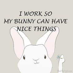 Oh yes... The real bosses are small, furry, and cute. #rabbit #rabbits #cuteanimals #cuteanimal #bunny #bunnies #pet #pets