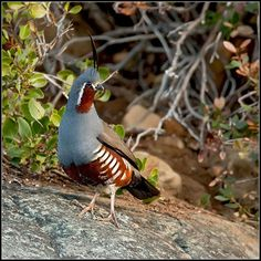 My dad wants quail soooo bad! Haha, not until we move into a bigger house