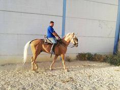 Se Vende Horses, Animals, Horses For Sale, Equestrian, Animales, Animaux, Animal, Animais, Horse