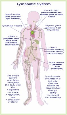 How Can Exercising Improve Your Lymphatic System?