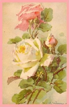 Roses Pale pink and yellow