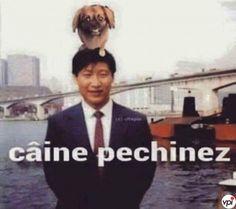 Câine pechinez - Viral Pe Internet Bmw E46, Funny Pictures, Funny Memes, Humor, Comics, Cute, Fictional Characters, Random, Fanny Pics
