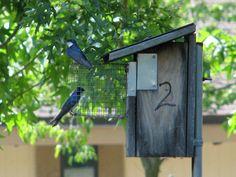 bird house guards