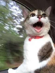 """Kitty-Cat: """"My God, Woman! Slow down before you get us killed!"""" (A great caption from: BeeBee Hogan.)"""