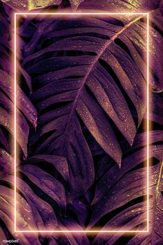 Pink neon frame on wet Monstera plant leaves mockup   premium image by rawpixel.com / PLOYPLOY