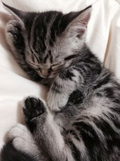 Cute Little Kitten ❥ 4U hilariafina http://www.pinterest.com/hilariafina/