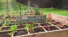 This is why Bigelow Tea is so proud of our community garden. #tea #gardening