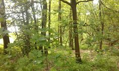 unser Wald hinter dem Haus
