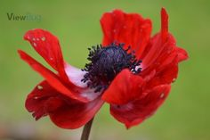 I just received 3 awards on Red Anemone and others 2 awards
