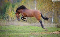Photos of Andalusian horses by Ekaterina Druz Equine Photography Cute Horses, Pretty Horses, Horse Love, Beautiful Horses, Bay Horse, Horse Ranch, Horse Photos, Horse Pictures, Andalusian Horse