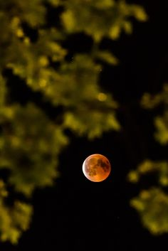 Blood Moon - Longest Lunar Eclipse of Century Study Schedule, Moon Photos, Lunar Eclipse, Blood Moon, Online College, Galaxy Art, Our Solar System, 21st Century, How To Introduce Yourself