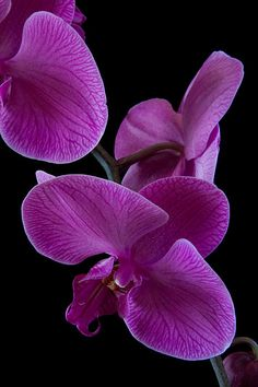 orchid, flower, photography