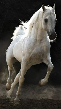 white horse, in the misty fog of the morning, at Rose cottages and gardens in Britain