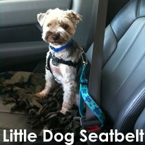 Doggie Seat Belt fabricated from a large dog collar