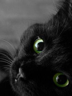 I love black cats! Keep them indoors on Halloween!