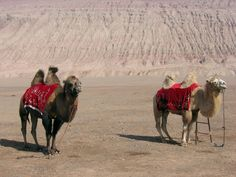 In the Turpan Basin in Western China.  An oasis in the desert was a stop on the Silk Road trading route.