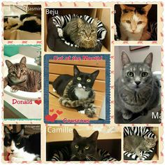 Petsmart Adoption Center, Delran All these kitties were rescued from the shelter and need forever homes!
