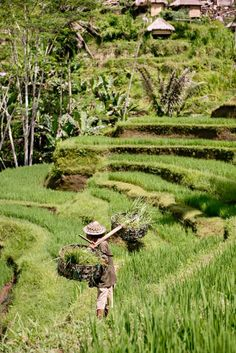 Rice Terrace: Things to do in Ubud The perfect way to spend a relaxing week in Bali https://www.urbanpixxels.com/bali-travel-guide/