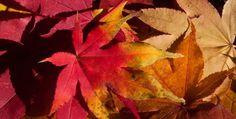 Finally The Season of Fall