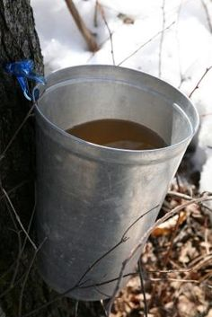 How to Make Maple Taps