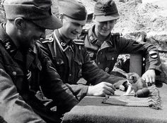 猫と手榴弾