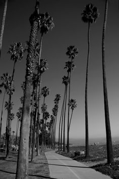 Santa Barbara Palm Park - Santa Barbara, California