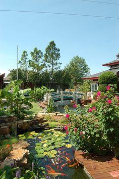 Amazing backyard pond. I want one.