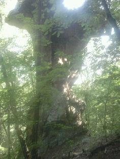 Pedestal rock ... along trail