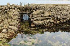 L'écluse à poissons distinguée : Le premier ensemble remarquable à être inscrit au titre des Monuments historiques est situé aux Sables-Vignier, commune de Saint-Georges-d'Oléron.