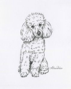 Poodle Art Poodle Drawing Original Drawing Poodle Sketch Dog